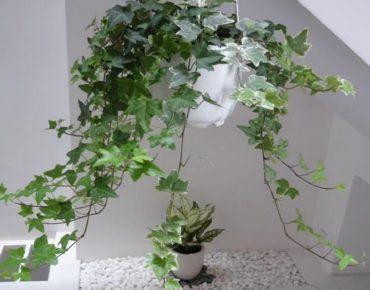 Tìm hiểu về các loại cây cảnh cho căn hộ