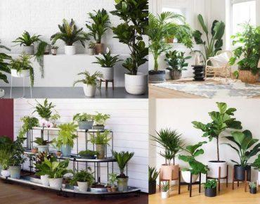 8 loại cây cảnh trang trí văn phòng tạo không gian xanh, sạch, đẹp